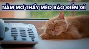 Mơ thấy mèo đánh bao nhiêu nhận định của các chuyên gia