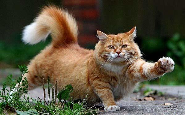 Nằm mơ thấy mèo đánh con gì? ý nghĩa ra sao
