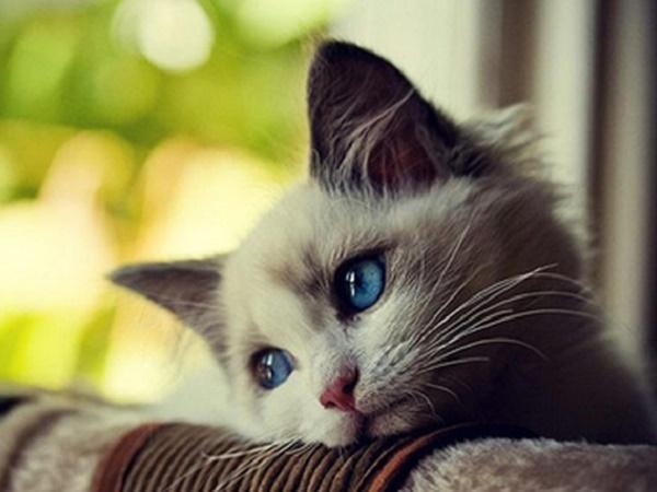 Mơ thấy mèo biến thành chuột là điềm lành hay dữ, đánh số mấy?