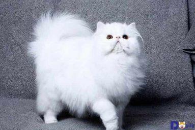 Mơ thấy con mèo trắng đánh số gì điềm báo gì?